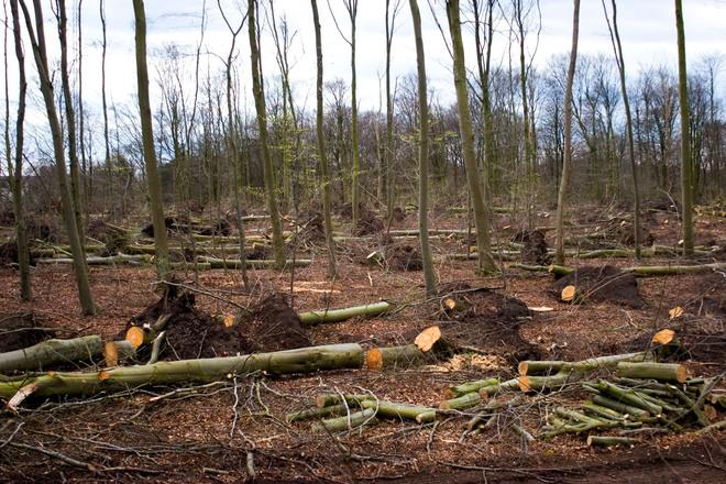 cut a tree
