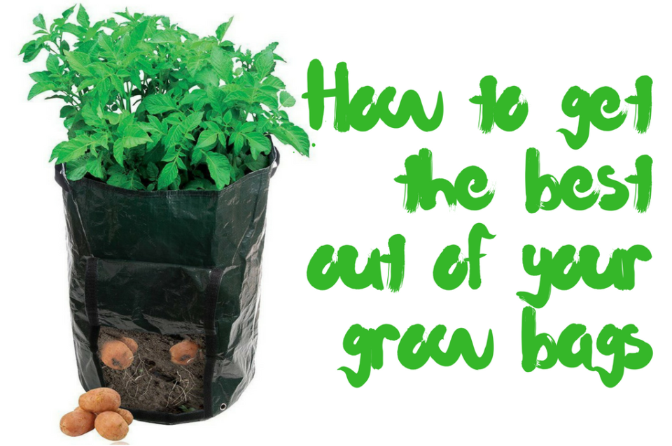 grow bags for tomatoes
