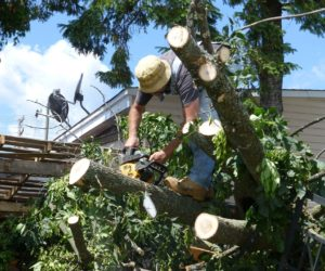 How to Hire Tree Care Service in USA