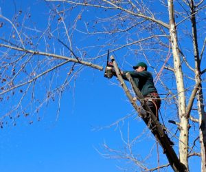 Best Tree Service & Care: You Should Know All Facts & Tips