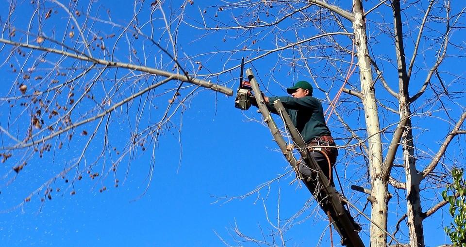 best tree service