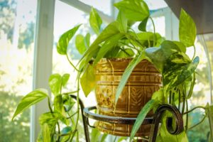 Tips For Caring Indoor Plants At Home