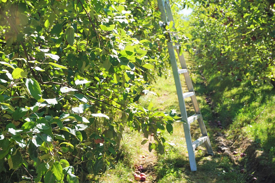 best step ladders for garden
