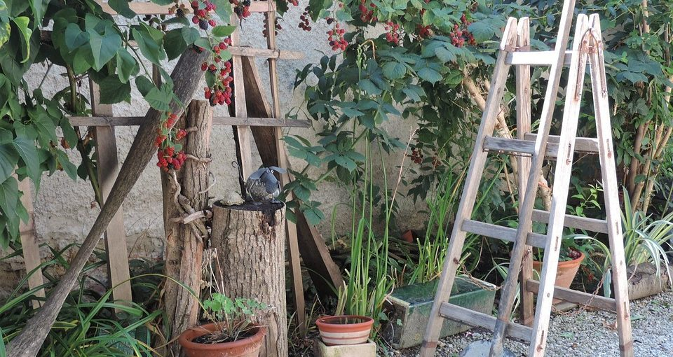 best step ladders for gardening