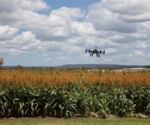 7 Solutions and Innovations That Are Transforming Agriculture