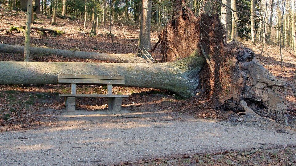 Common Signs That Tell You Need Tree Removal For Immediate Attention