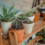 Indoor Low Light Succulents