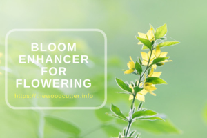 Best Bloom Enhancer
