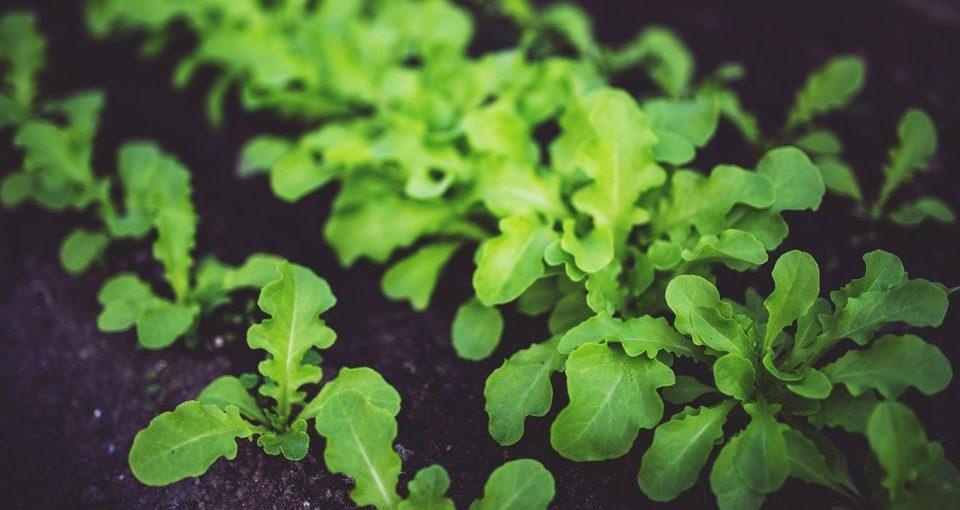 Winter Gardening Tips And Tricks