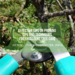 Effective Tips on Pruning Tips and Techniques for Excellent Tree Care