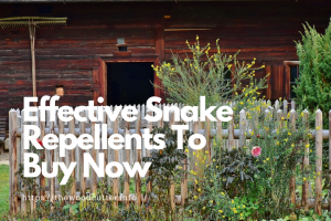 best Snake Repellents To Buy Now