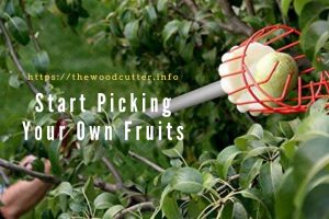 Best Fruit Pickers