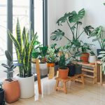 Best Easy-Care Plants To Keep Indoor