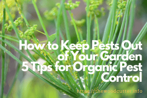 5 Tips for Organic Pest Control