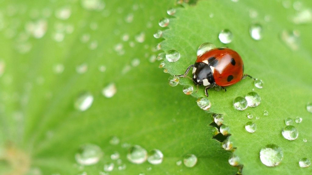 How to Keep Pests Out of Your Garden