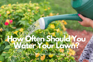 How Often Should You Water Your Lawn?