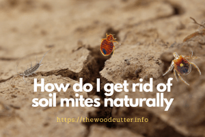 How To Get Rid of Soil Mites in Garden