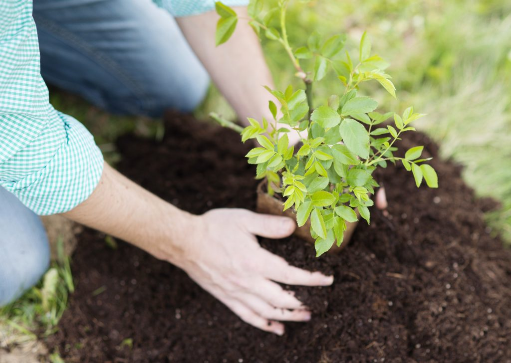 Popular types of trees to plant in a small garden
