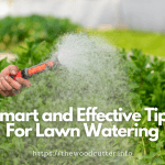 Tips For Lawn Watering