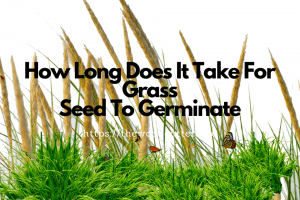 How Long Does It Take Grass Seed To Grow