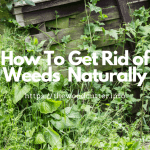 How To Get Rid of Weeds In Lawn Naturally