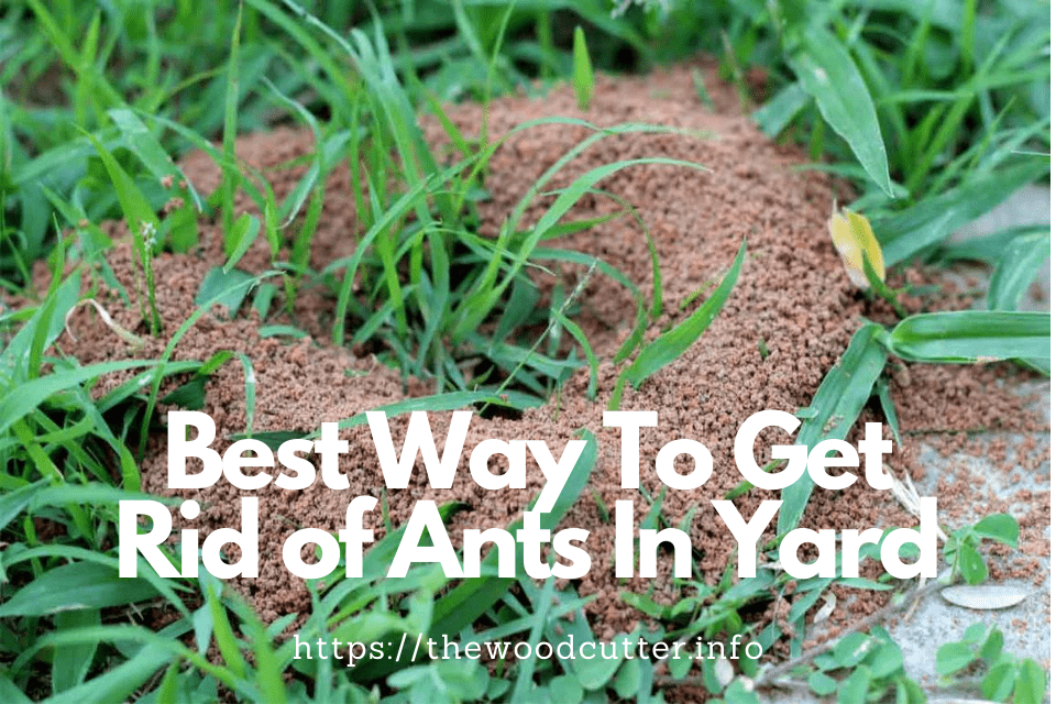 best way to get rid of ants in yard