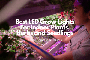 Best LED Grow Lights for Cannabis