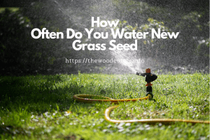 Best time To Water Grass Seed