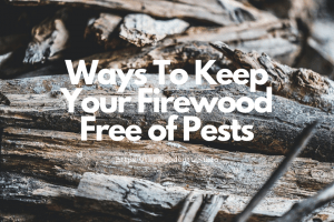 How To Deal With Termites In Firewood-Tips To Keep Your Firewood Free Of Pests
