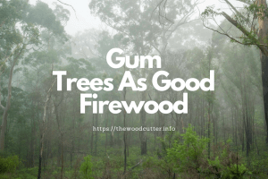 Gum Trees That Also Make Good Firewood