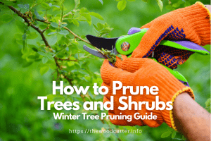 Winter Tree Pruning Guide For Trees And Shrubs