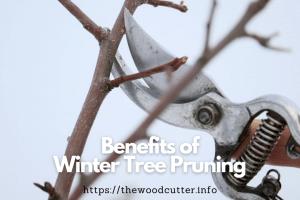 Benefits of Winter Tree Pruning