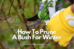 How To Prune A Bush For Winter