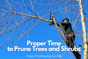 What is The Proper Time to Prune Trees and Shrubs