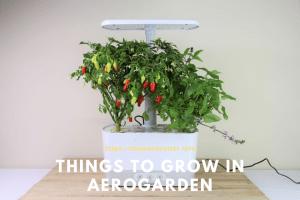 Things To Grow In Aerogarden